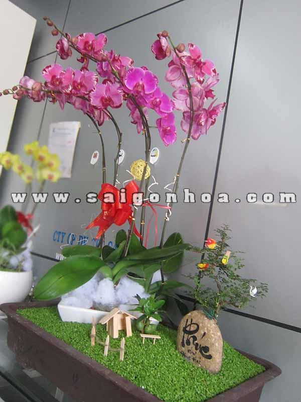Lan Ho Diep Tim 3