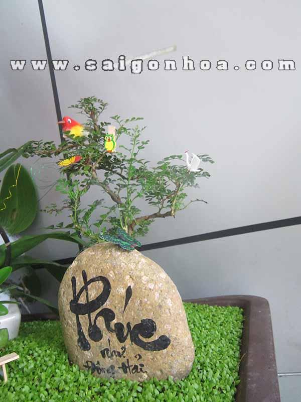 Lan Ho Diep Tim 5