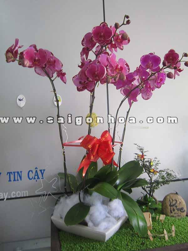 Lan Ho Diep Tim 6