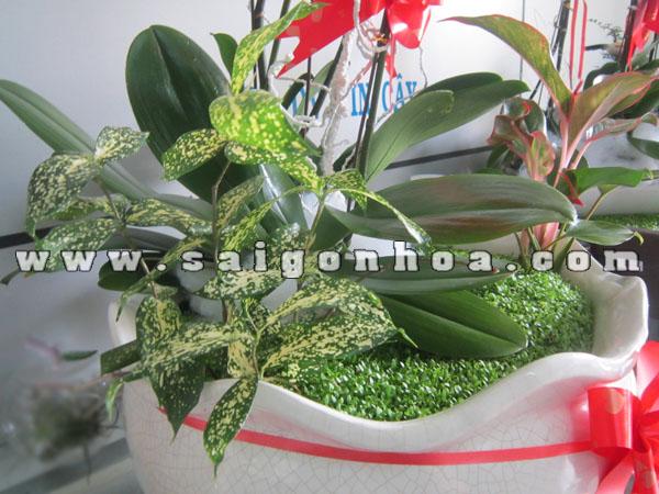 Phoi Hop Cay Bui Trong Tieu Canh May Man Lan Ho Diep 3 Canh