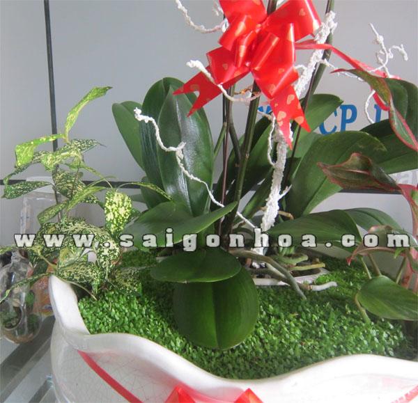 Tham Co May Man Trong Tieu Canh Hoa Lan Ho Diep 3 Canh