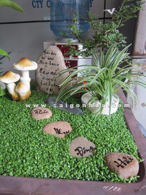 Tieu Canh Hoa Lan Mung Tho3