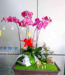 Tieu Canh Lan Ho Diep 1