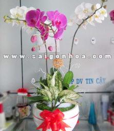 Tieu Canh Lan Ho Diep