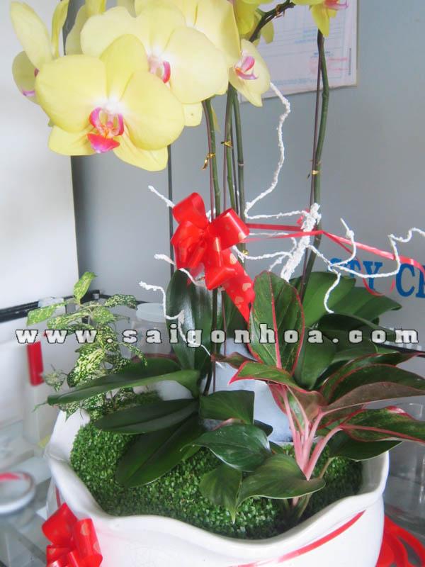 Tieu Canh May Man Hoa Lan Ho Diep 3 Canh