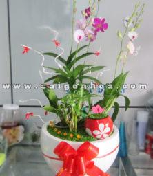 Tieu Canh May Man Lan Dendrobium Con Duong Tinh Yeu