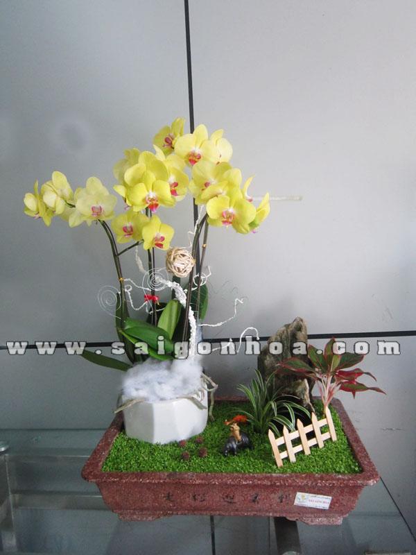 Tieu Canh May Man Lan Ho Diep Chieu Binh Yen