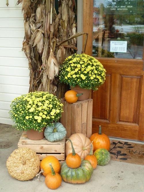 trang tri hoa cuc cho san vuon nha o ngay halloween