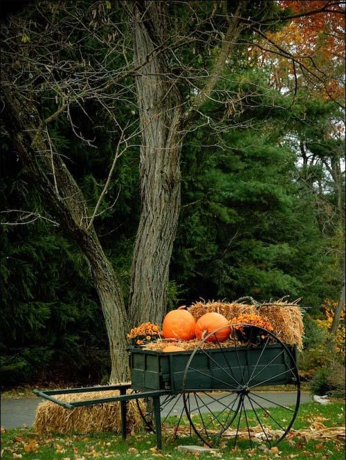 trang tri san vuon voi hoa cuac bi ngo rom ra ngay halloween