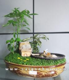 Tieu Canh Cay May Man Ngu Ong Dai Dien