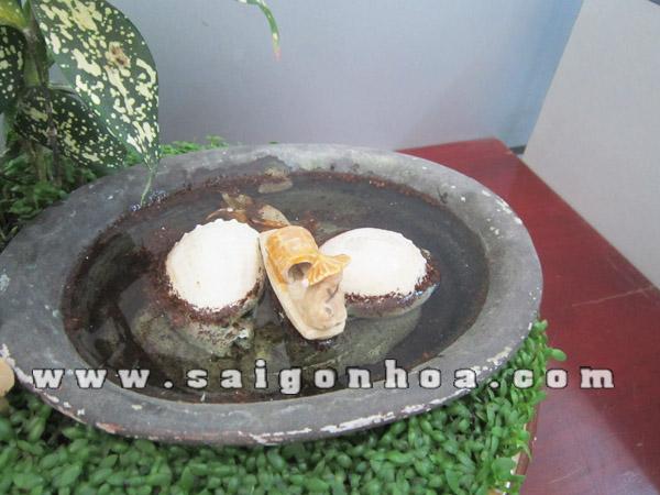 Tieu Canh Cay May Man Ngu Ong Ho Nuoc