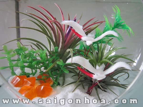 Cay Khong Khi Chau Thuy Tinh