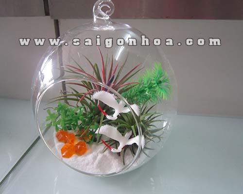 Cay Khong Khi Co Trang 1