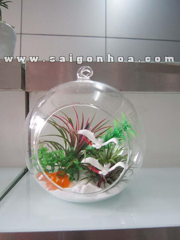 Cay Khong Khi Dan Co Trang