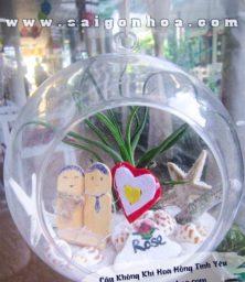 Cay Khong Khi Hoa Hong Tinh Yeu 1