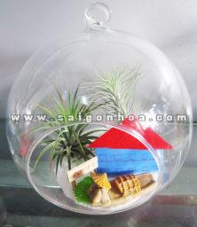 Cay Khong Khi Mai Truong Xua Tong Quat