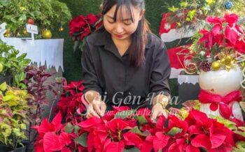 Hoa Trang Nguyen Chau Hang Rao