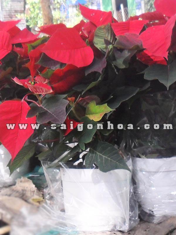 hoa trang nguyen chau nhua loai lon trang tri