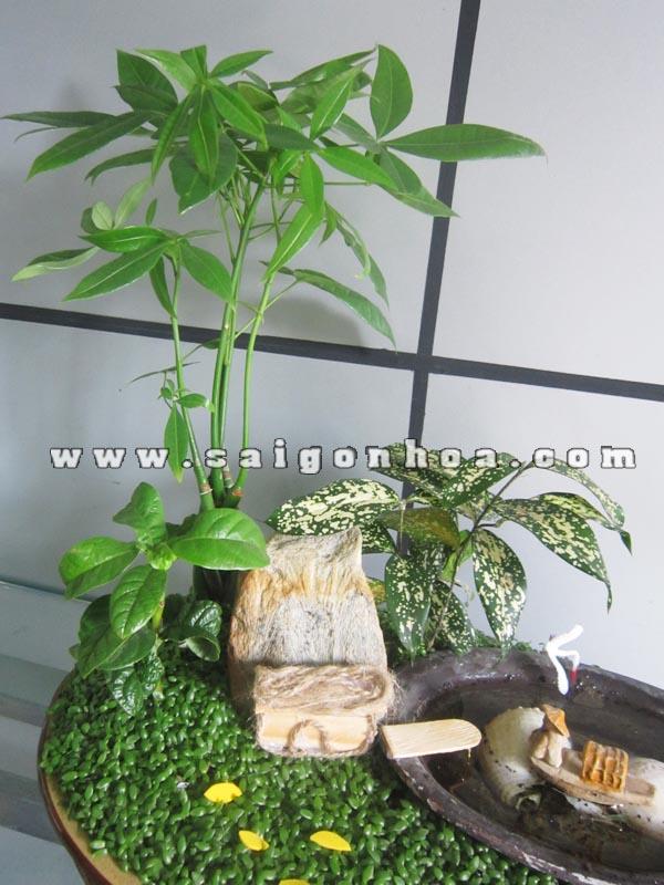 Ngu Ong Dai Dien