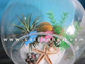 Tieu Canh Cay Khong Khi Dai Duong Cau 18 Cm