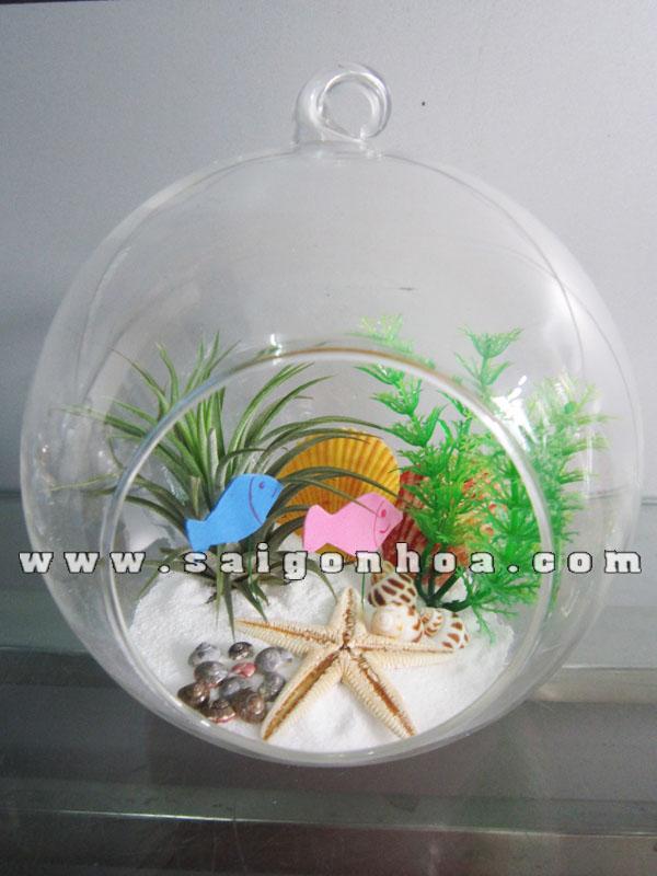 Tieu Canh Cay Khong Khi Dai Duong Cau Treo 18 Cm