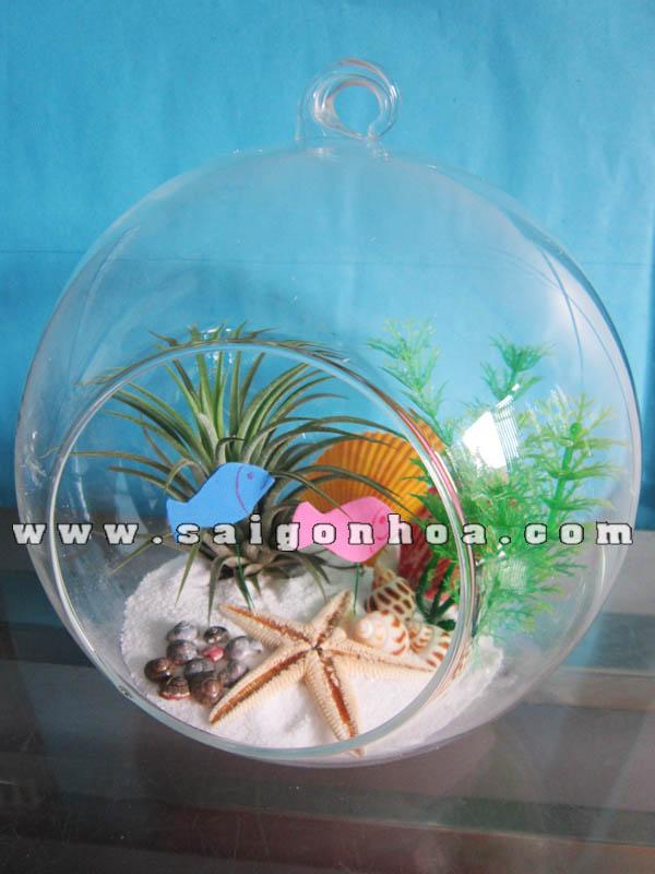 Tieu Canh Cay Khong Khi Dai Duong Menh Mong Cau 18 Cm