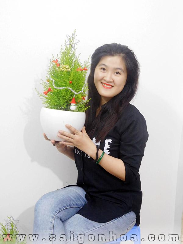 Cay Tung Thom Chau Su Noel