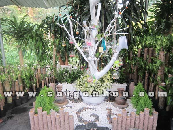 Ket Hop Cay Xanh Trong Tieu Canh Cay Khong Khi