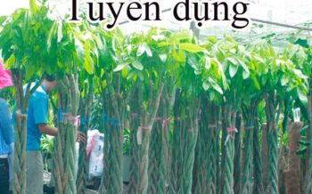 Tuyen Dung Nhan Vien Ban Hang