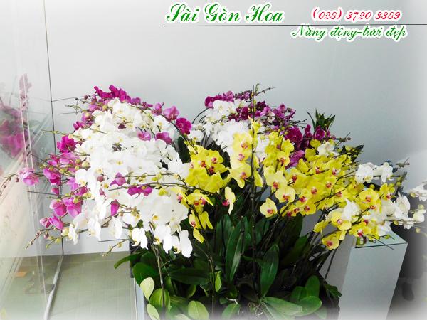Cay Hoa Lan Ho Diep