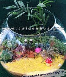 Tieu Canh Cay Khong Khi