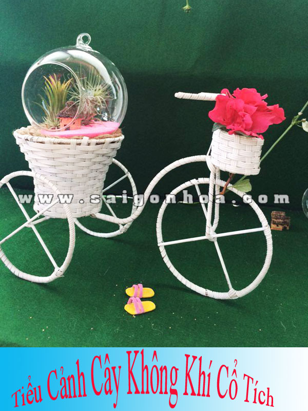Tieu Canh Cay Khong Khi Co Tich