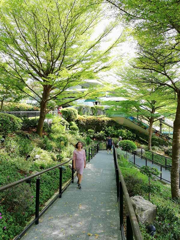 Những vị trí trồng cây Bàng Đài Loan phù hợp