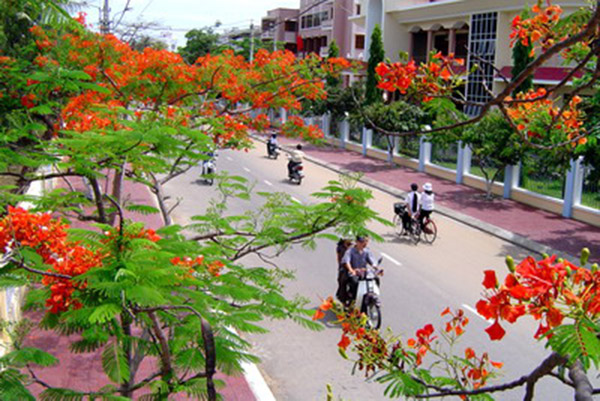 images11006_hoaphuong156