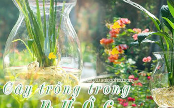 Cay Trong Trong Nuoc