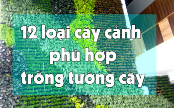 Cay Canh Trong Tuong Cay