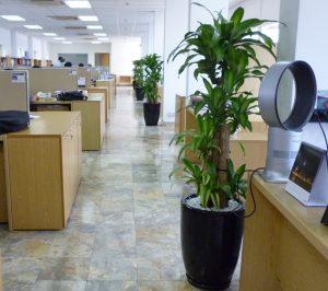 Top 5 vị trí ưa chuộng đặt chậu cây phát tài nội thất