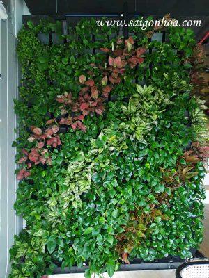 Hướng dẫn lựa chọn cây trồng tường cây