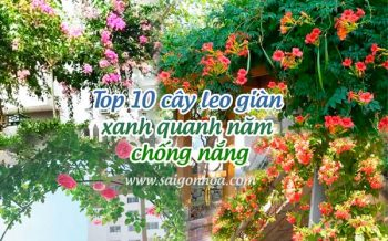 Cay Leo Gian Xanh Quanh Nam