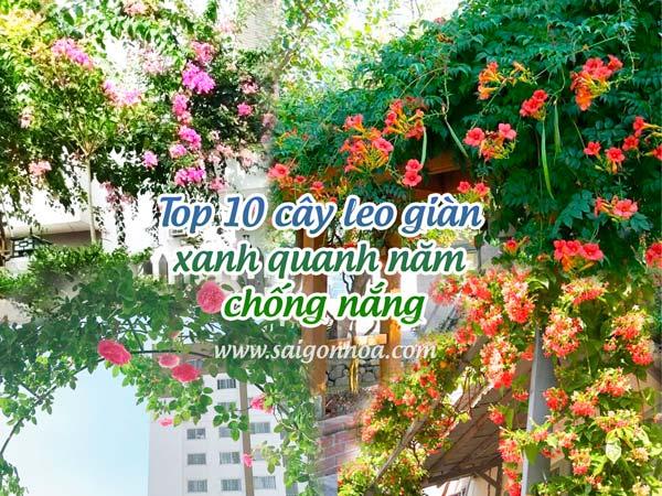 Top 10 Cây Leo Giàn Xanh Quanh Năm Chống Nắng