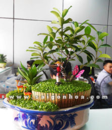 Chau Tieu Canh May Man 20 Thang 11