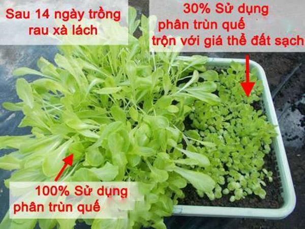 Bon Phan Trun Que Sao Cho Hieu Qua Voi Trong Rau Qua Sach Tai Nha 2