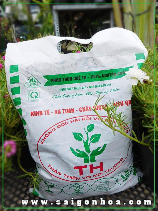 Phan Trun Que Th
