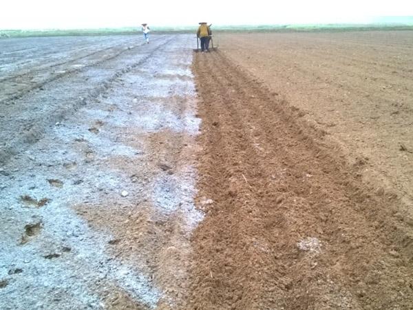 Vôi bột xử lý đất trồng