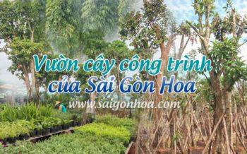 Vuon Uom Cay Cong Trinh 1