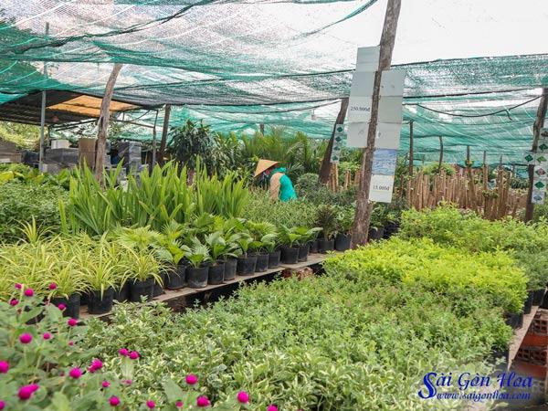 Vuon Uom Cay Cong Trinh