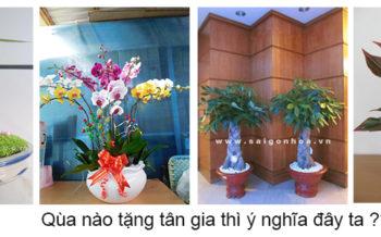 Qua Tang Tan Gia Y Nghia