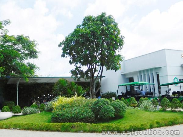 Ban Cay Loc Vung Gia Re
