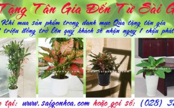 Qua Tang Tan Gia Den Tu Sai Gon Hoa