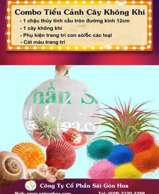 Combo San Pham Cay Khong Khi